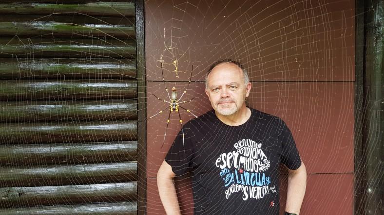 Araña de Queensland